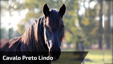 901dd2018 Cavalo preto lindo, veja o brilho de sua pelagem e calda maravilhosa!
